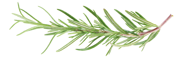 rosemary2.png