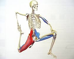 Tight Psoas Muscle - This major muscle holds upper spine to lower spine, it's what connets us.