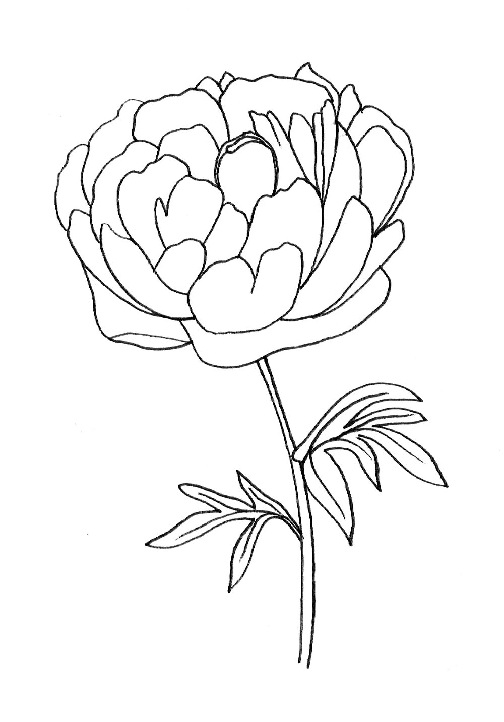 03-Shading Technique on Florals-Peony Outline.jpg