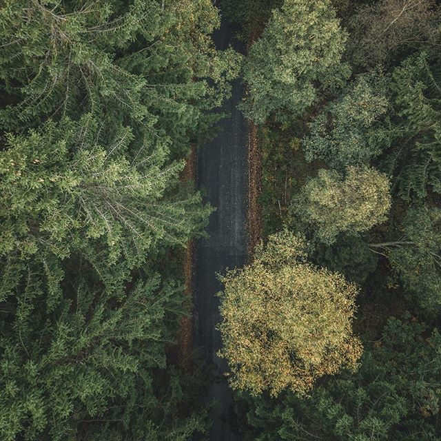 Autumn Road Trip  #welcometonature #naturelovers #autumn #sweden #visitsweden #nature #outdoors #aerial #photooftheday #naturephotography #forest #dji #mavicpro #drone #dronestagram #droneinfluencer #artistfound #dronephotography #dronetagraphy #dronefeed #droneoftheday #droneofficial #acreativenetwork #photooftheday #dronepointofview #landscapesandgoosebumps #instadaily #droneporn #road #roadtrip #discoverdrone