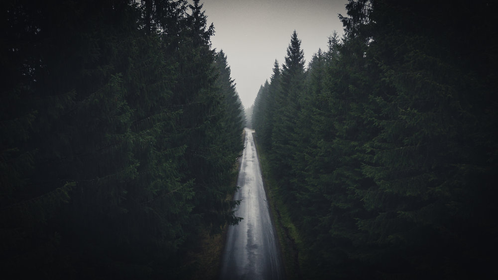 Forest-road 01 16x9.jpg