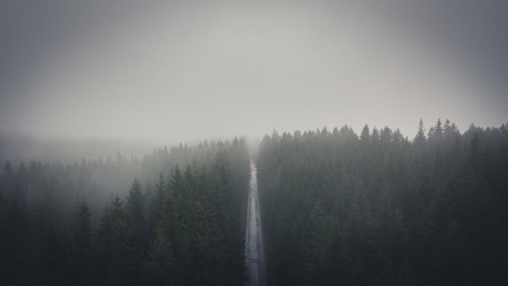 Forest-road 03 16x9.jpg