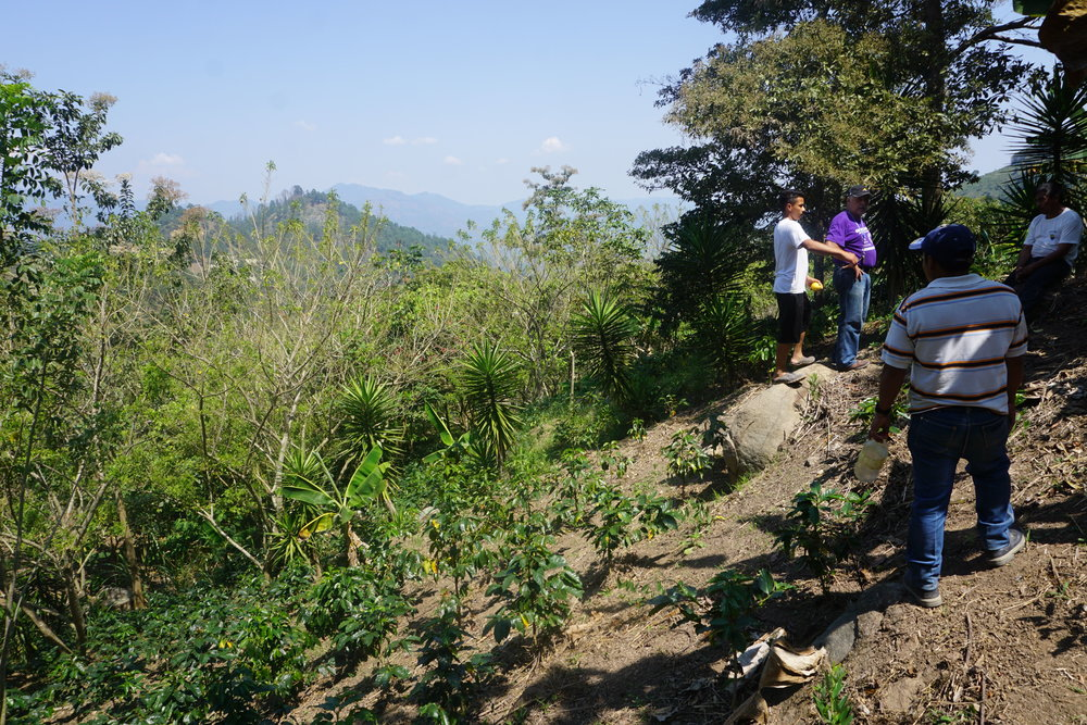 Villagers from La Majada inspect a barren mountain site for future planting of tree seedlings.