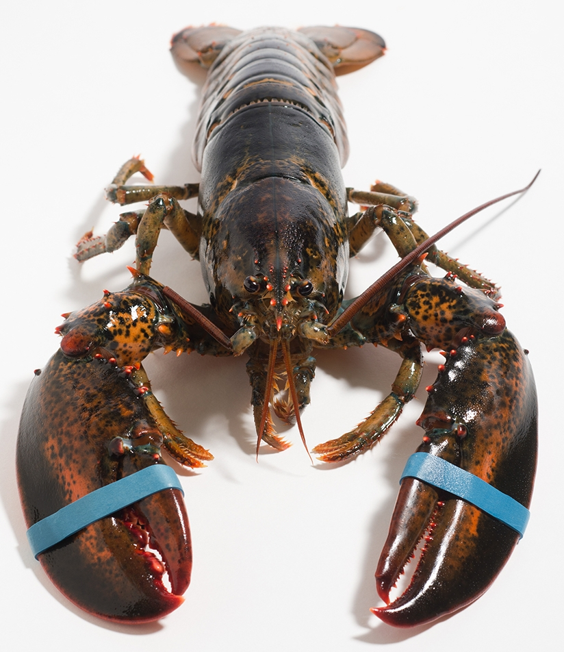 PHOTO COURTESY OF HARBORFISH.COM  Phoebe Little '20 shares how her Maine upbringing shapes her understanding of the New England lobster industry.