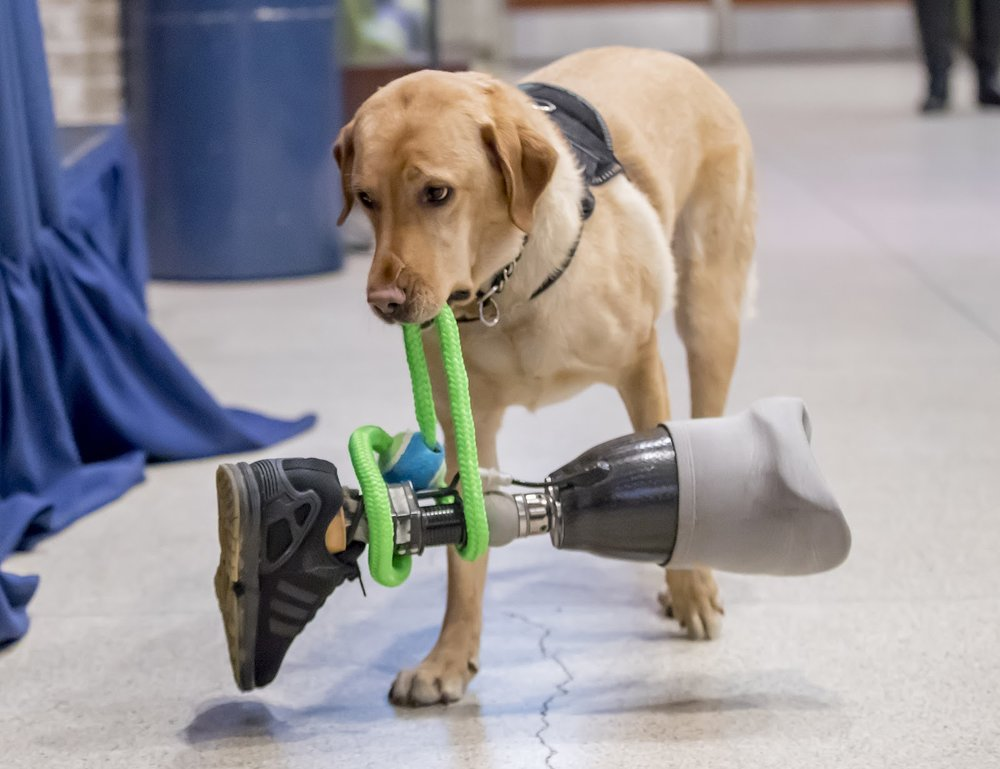 PHOTO COURTESY OF ECAD1.ORG  As the number of service animals on campus increases, it's important to learn how to interact with them.