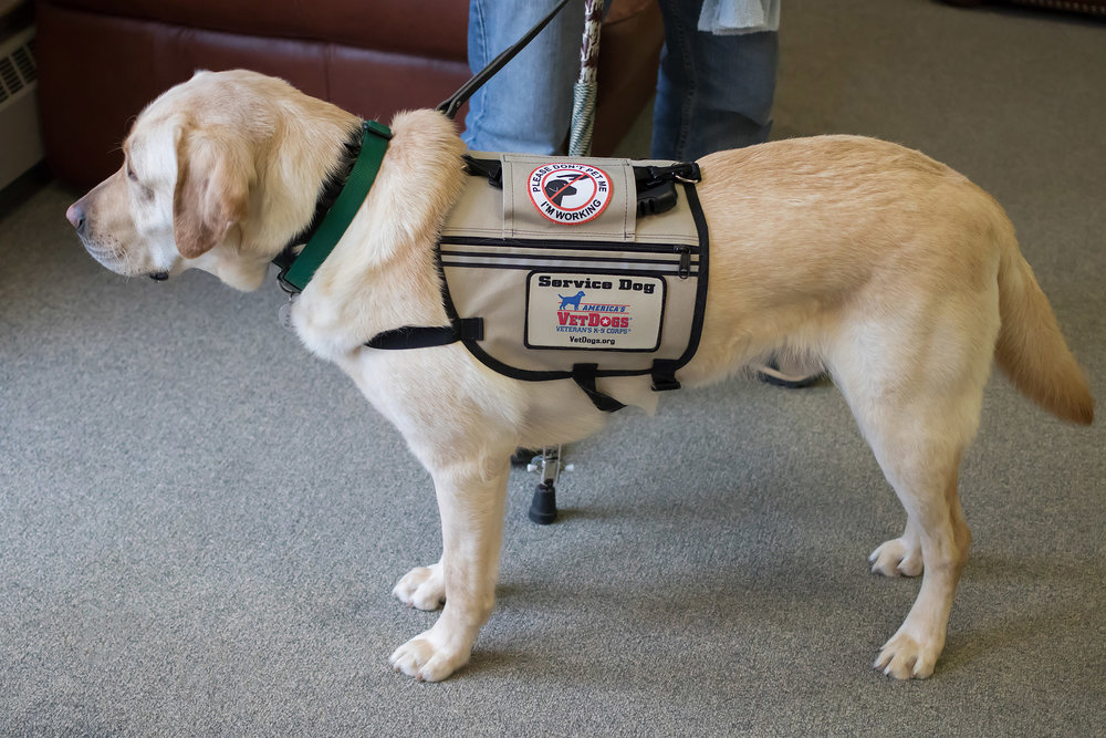 PHOTO COURTESY OF PEOPLE.COM  As the number of service animals on campus increases, it's important to learn how to interact with them.