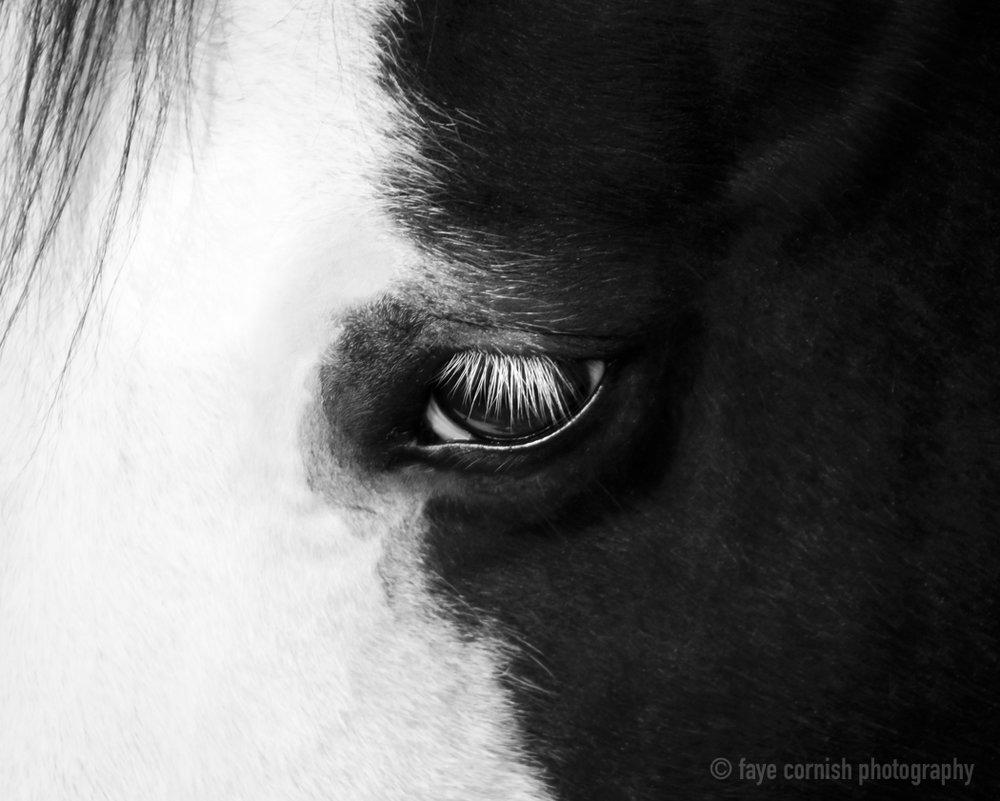 Eye of Phantom