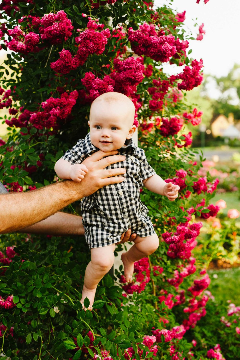 Beautiful Schenectady Family Lifestyle Session  - click on the above image to view gallery