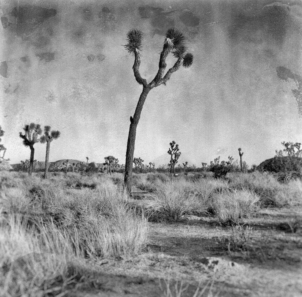 Joshua Tree 1.jpg