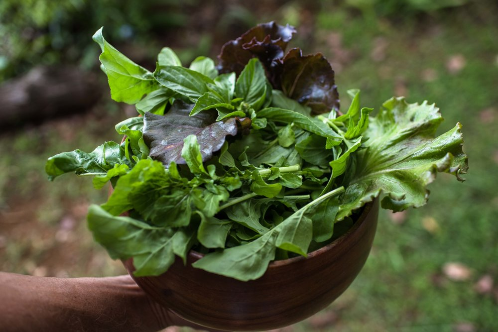 fresh salad.JPG