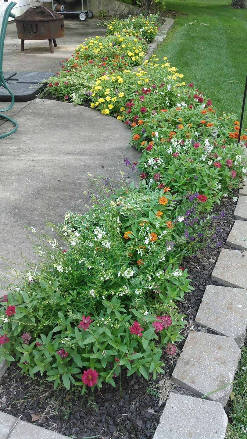 zinnia baskets planted 2.jpg