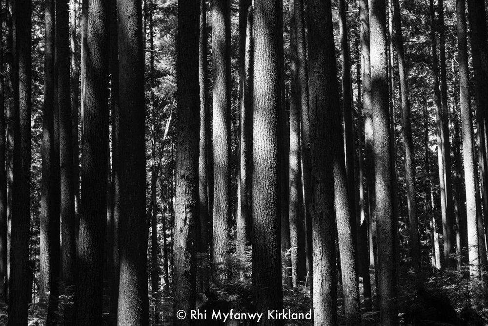 2018.07.13 trees bw watermark-6.jpg
