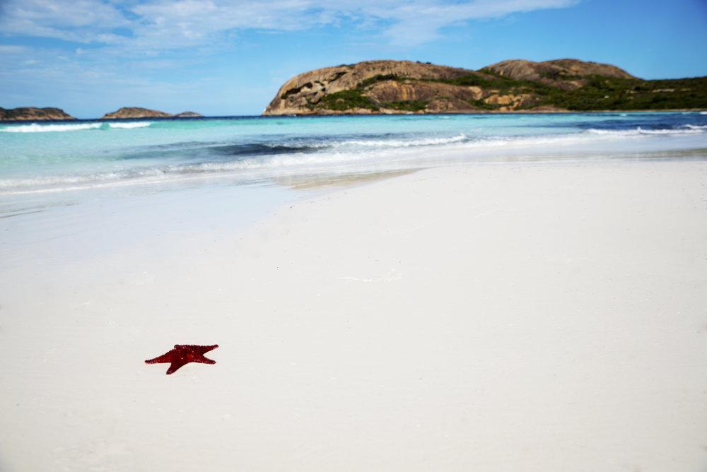 Lucky Bay Starfish