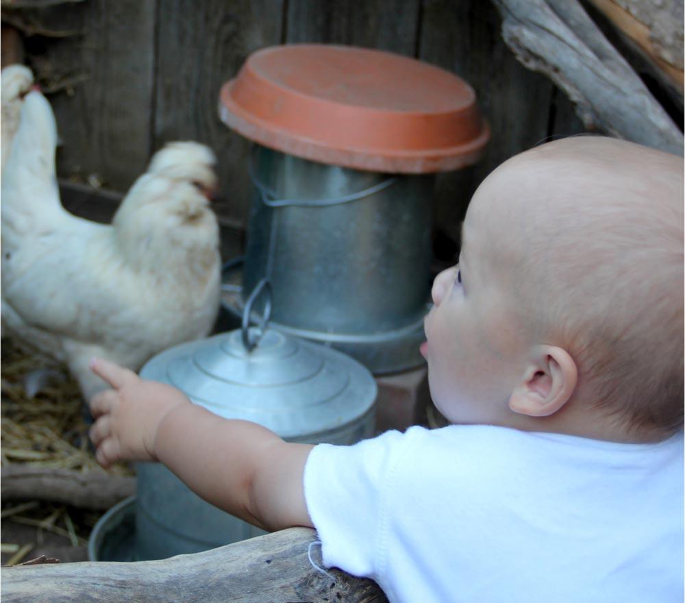 chicken-coop-2.jpg