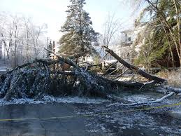 Shrewsbury, ma area tree damage insurance claim