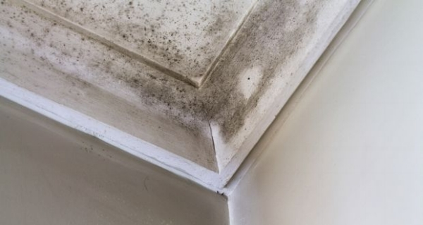 Middleborough MA mold damage claims