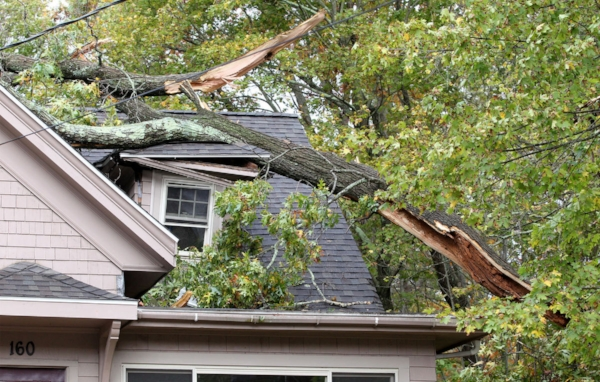 Mansfield MA tree damage claims