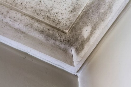 Recent Putnam CT mold damage claim