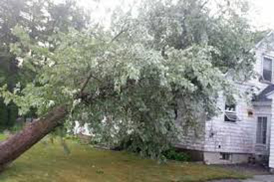 Recent Northampton MA wind storm damage claim