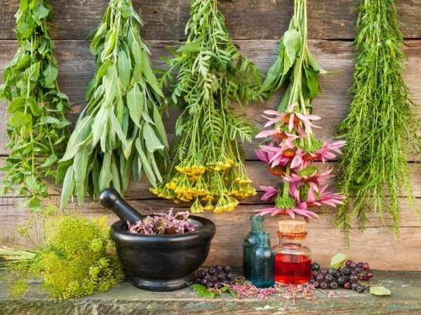 medicinal-herb-garden-600x450.jpg