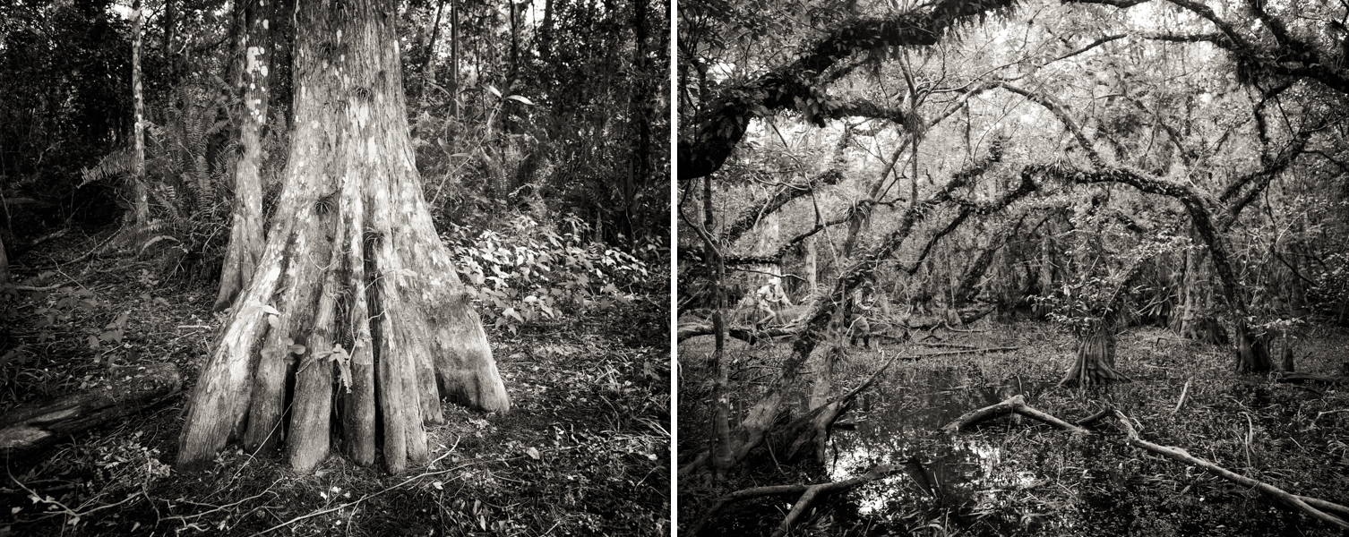 Two shots from around Roberts Lake in the Big Cypress Preserve in the Florida Everglades