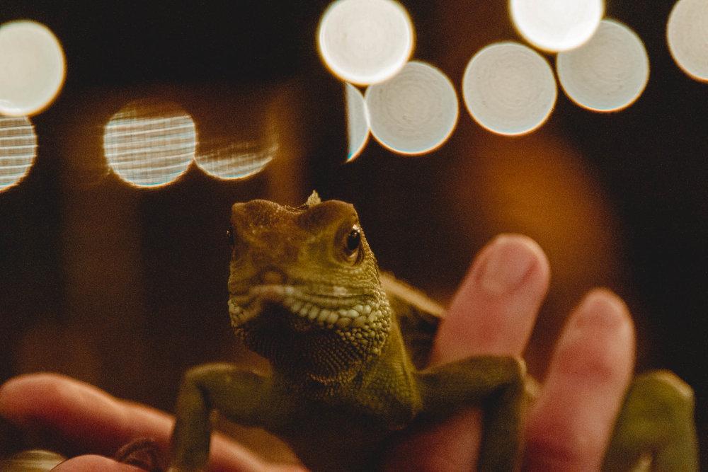 Buzz mill, san marcos txnovember 12, 2017 - Reptile Badg