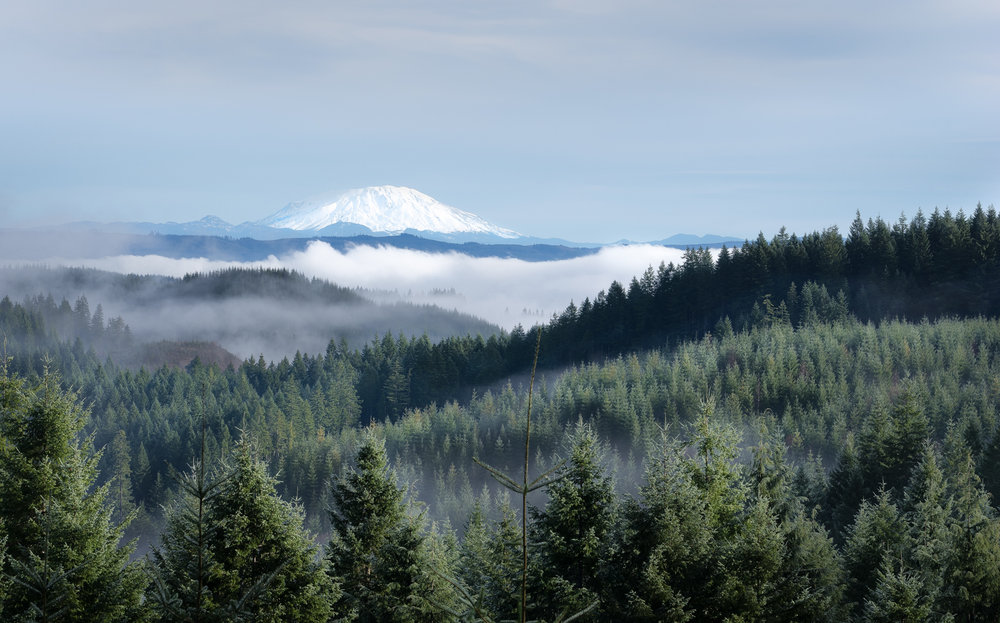 Clatsop State Forest in the foreground and  Mt. St. Helens in the distance.  Early morning fog adds a bit of mystery in my mind's eye.
