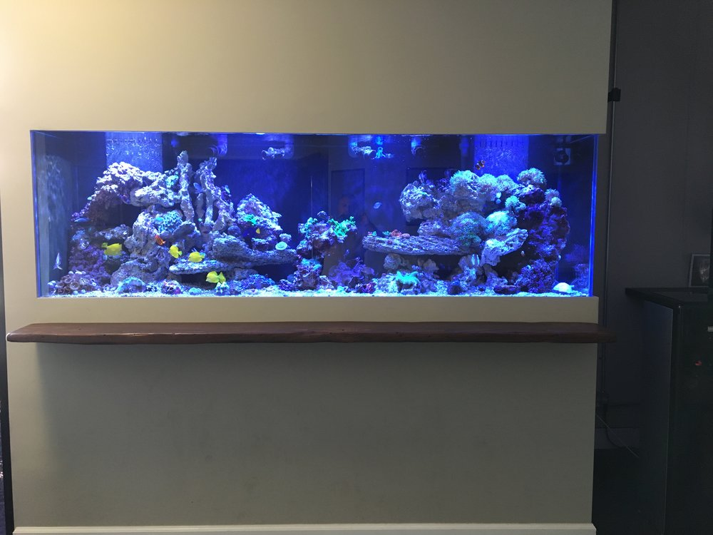 Fish Tank.jpeg