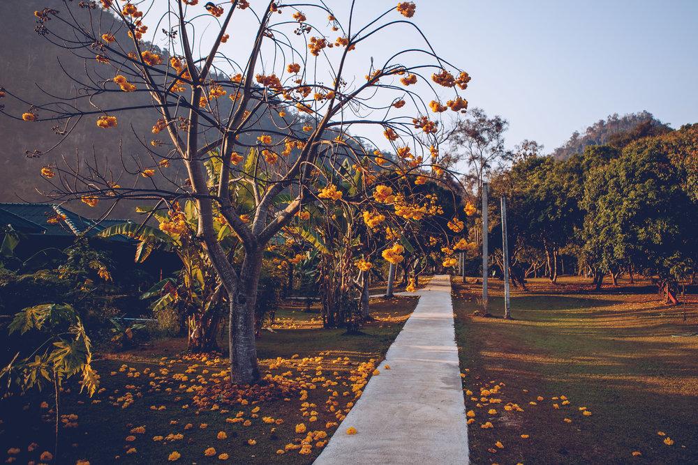 ForestMonestary-3-2.jpg