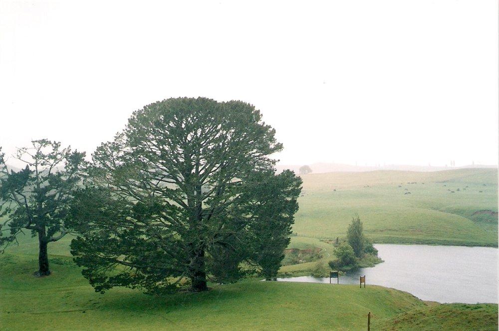 2.7 Hobbiton party tree.jpg