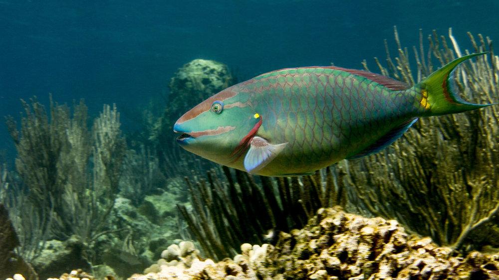 Coral reef managers' handbook -
