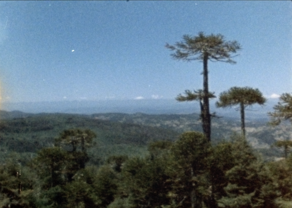 """Pehuén,"" photo still courtesy of Mapuche Filmaker Francisco Huichaqueo"