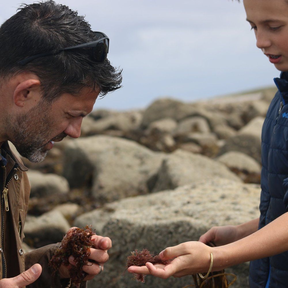 Father/Son seaweed foraging