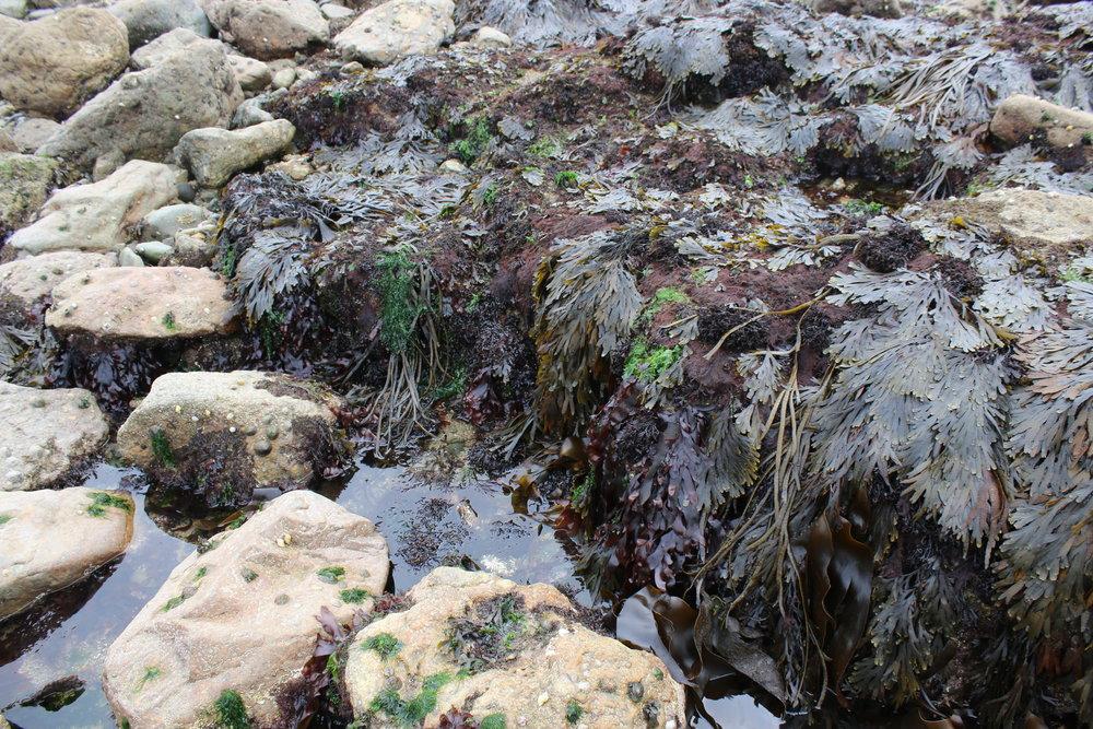 A variety of seaweed