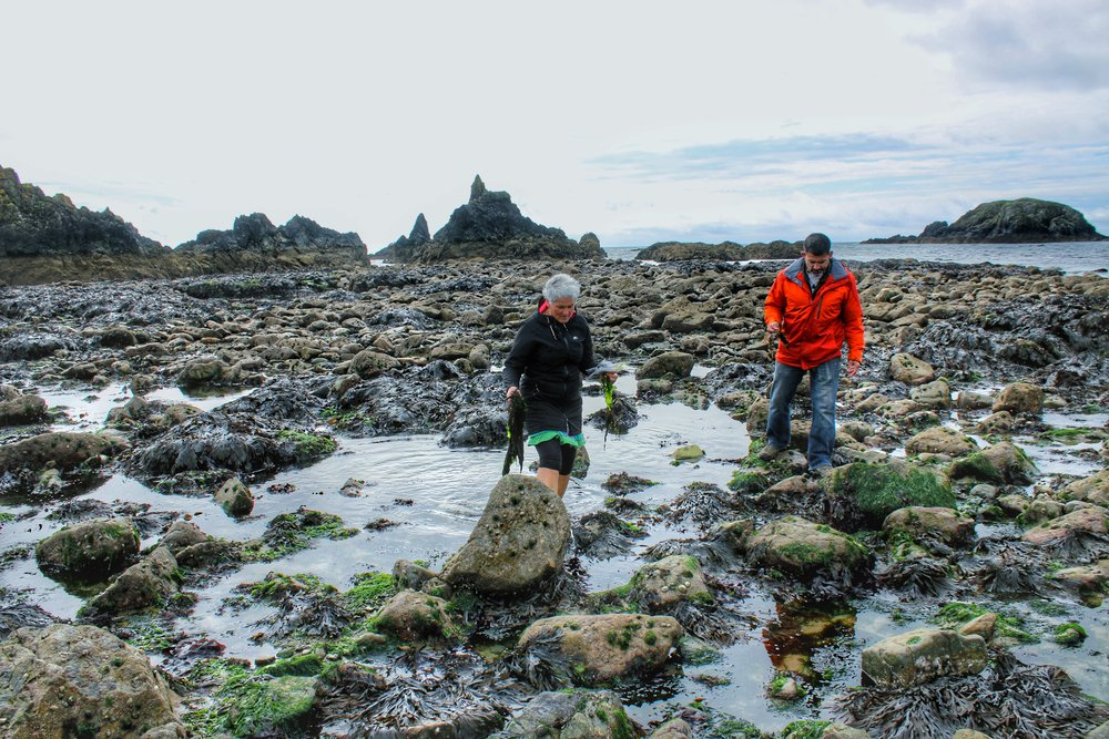 Foraging for Seaweed with Marie Power in Tramore, Ireland in September 2017 (Photo by Christina Schindler)