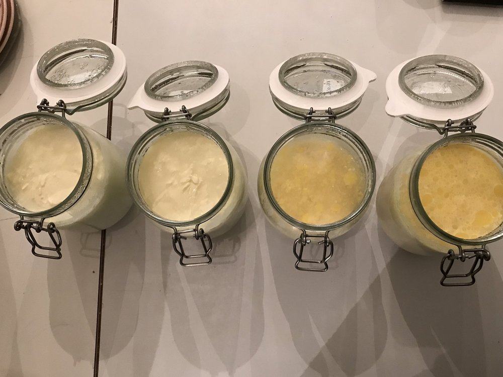 Different stages of cheese fermentation