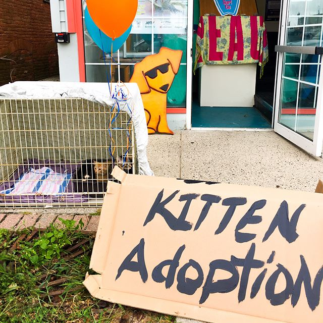 Adopt a kitten today @luckydogsurf give these babies a forever home!!! Thanks UA4A for rescuing them! @seabrightnj #surfshop #seabright #jerseyshore #adoptioncats