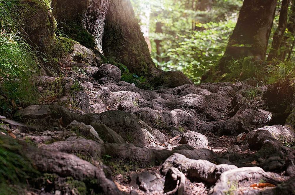 dg-partners-forest-floor-1500px.jpg
