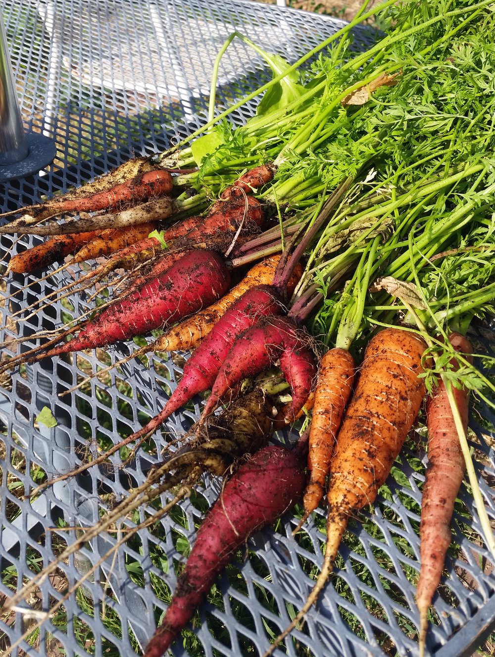 I'm looking to multiply last year's carrot harvest x100