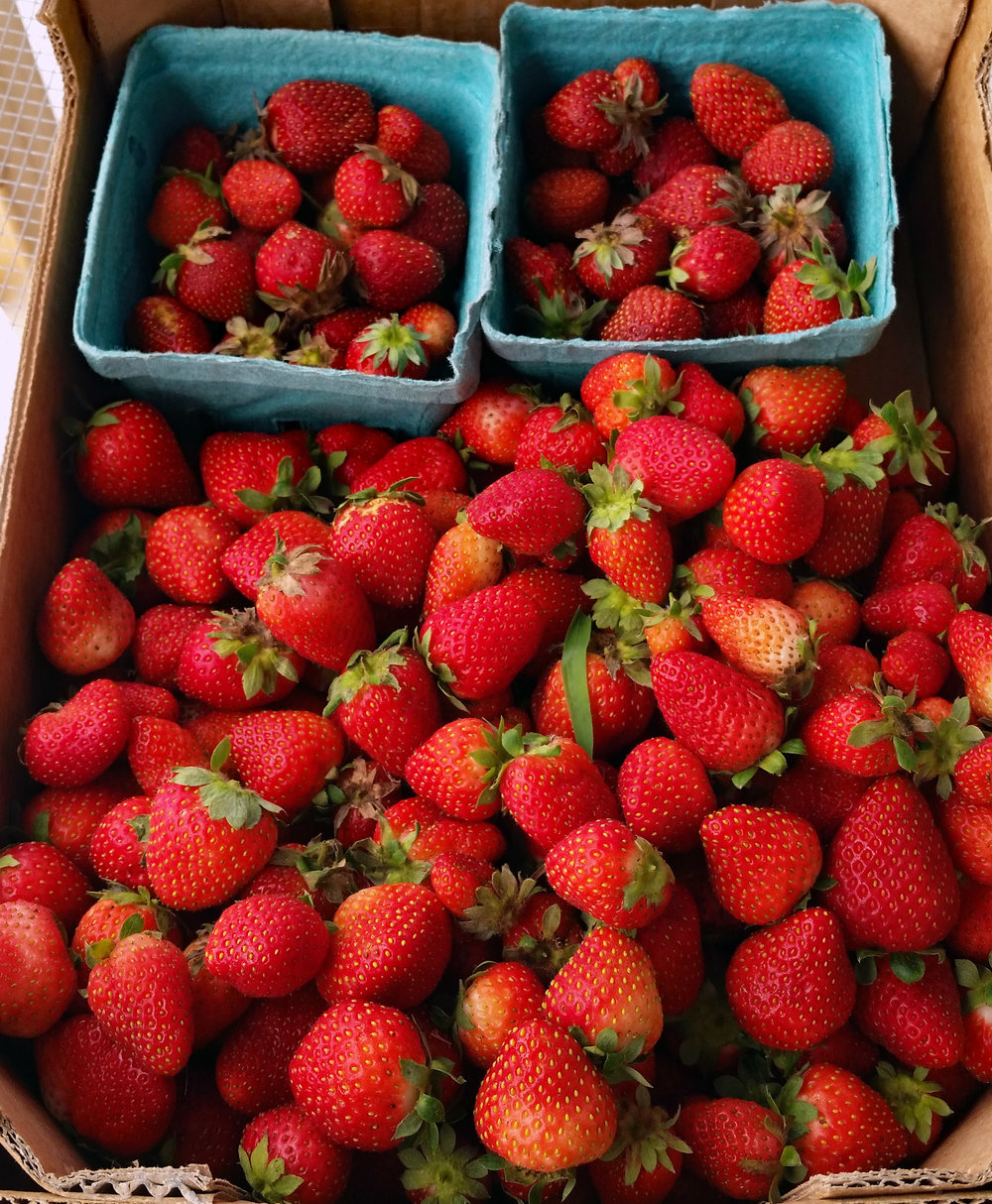 a market gardener can never grow enough strawberries...
