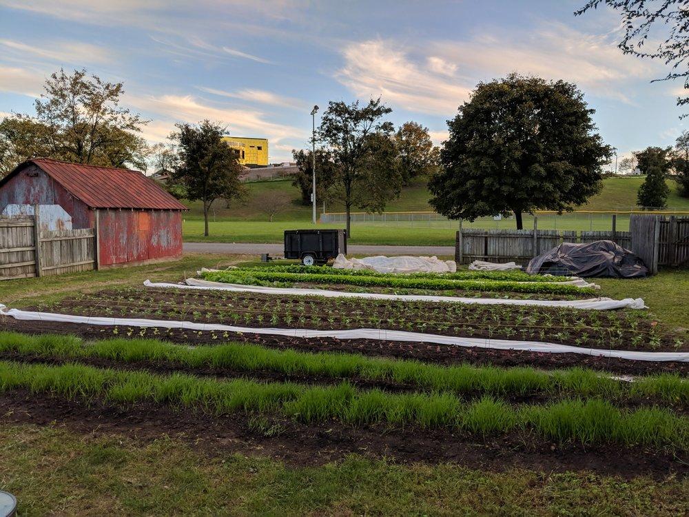 fall plantings next door to Fallon Park