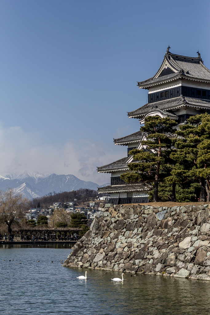 A few swans enjoying the moat of Matsumoto Castle with imposing mountains as a backdrop