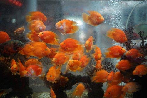 fish-market-sanya.jpg