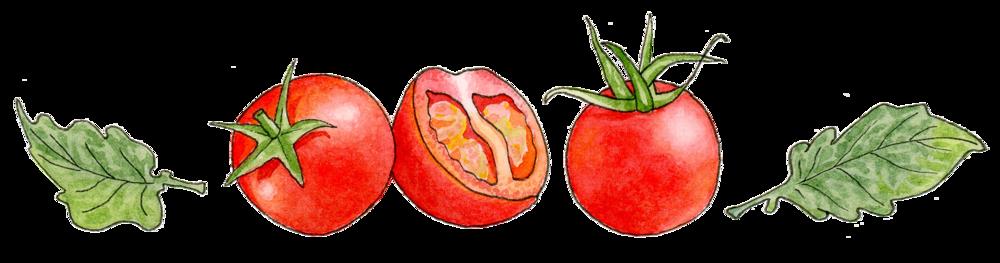TomatoDivider.png