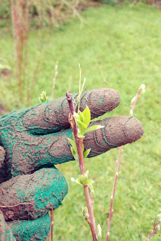 planning-a-vegetable-garden-00016.jpg
