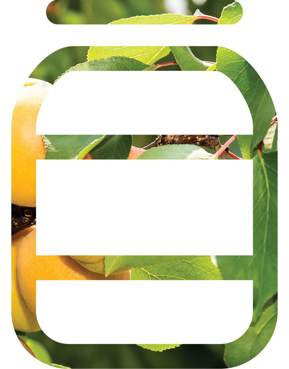 apricot jar cutout.png