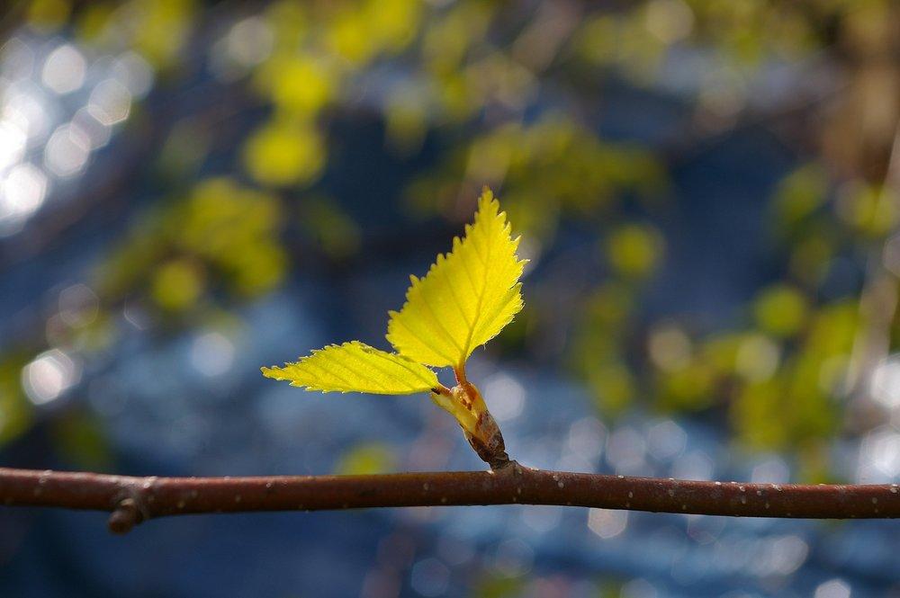 leaf-1359023_1920.jpg