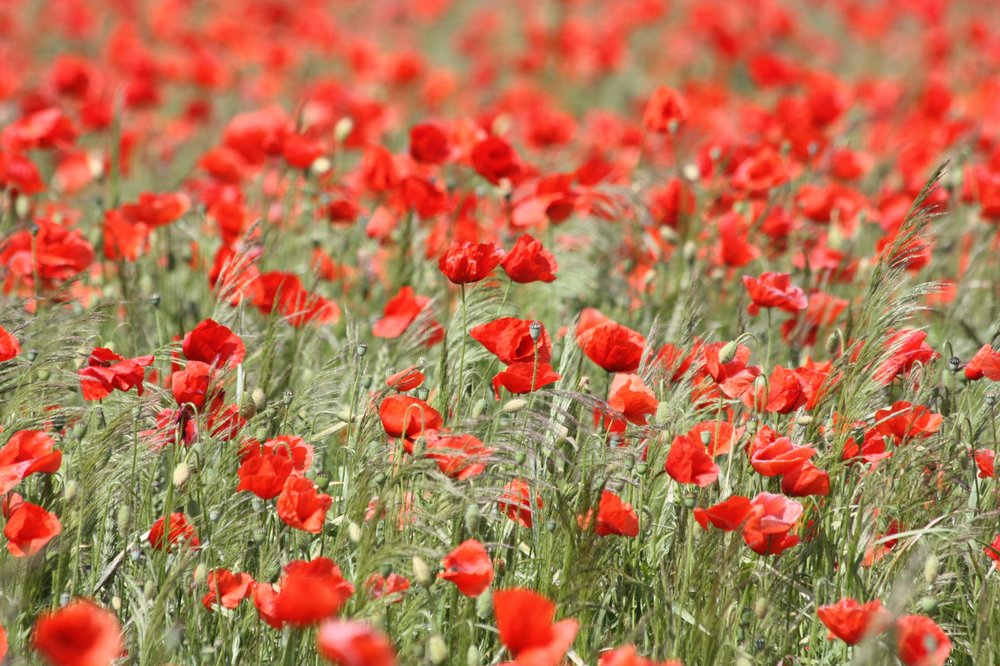 Remembrance Day Observance -