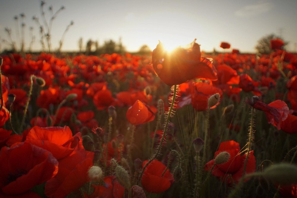 Lest We Forget 100 Years Of Armistice Day St Georges Society Of