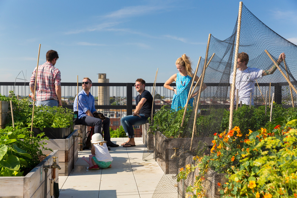Garden plots on the communal rooftop at The Commons Brunswick. Photographer Andrew Wuttke